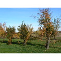 trees nature colors autumn violoncellistadelblu