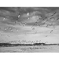 birds beach sky bw