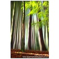 Nature Landscape Fine Art Abstract Woodland Trees Light Blur Spideyj