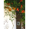 door village France flowers dog