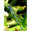 dragonfly nature France spring june leaves leaf countryside grass
