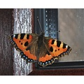 butterfly nature insect colour beauty