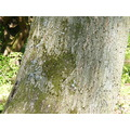 Moss Tree Love Heart