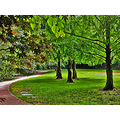 park piedmont piedmontfph green lawn summer trees path walkway