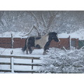 poor horse out in all weathers!