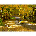 autumn yellow fall auto car