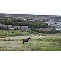 wales blaenafon railway trains animals horses