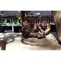 india elephantaisland animal ape indix elepx animx apex