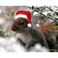 Squirrel Clause
