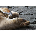 Galapagos Islands wildlife landscape ecuador travel