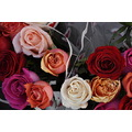 rose roses flower flowers