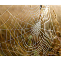 spider web dew grass autumn
