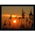 greylake sun sunset somerset carl bovis england uk