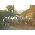rush hour devon
