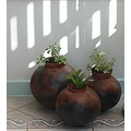 pots plants shadows