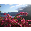 Bougainvillier flowers and view on the straight of TAHUATA HIVA OA Marquesas South district, Fr...