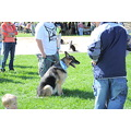 Mutt Mania Shelter fund raiser