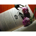 Flower Rose Book