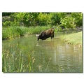 netherlands arnhem zoo animal buffalo nethx arnhx zoox animx buffx