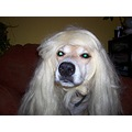 batdog dog wig