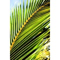 palm leaf palm tree leaf tropical