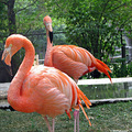 birds zoo Assiniboine Canada Winnipeg flamingo carlsbirdclub