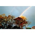 trees rainbow nature