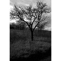 landscape nature tree field sky could bw