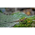 Lizard reptiles Animal Nature Iran Jungle Green Life Persia Golestan G