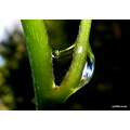 water rain drop twig reflection