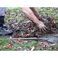 rake leaves cleaning hands dirty