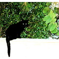 black cat green leaves white wall
