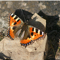 butterfly spring luxembourg