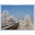 winter ice snow sky tree landscape nature holland CH1988